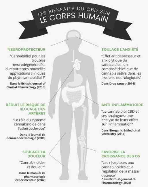 Comment le CBD agit sur le corps ?
