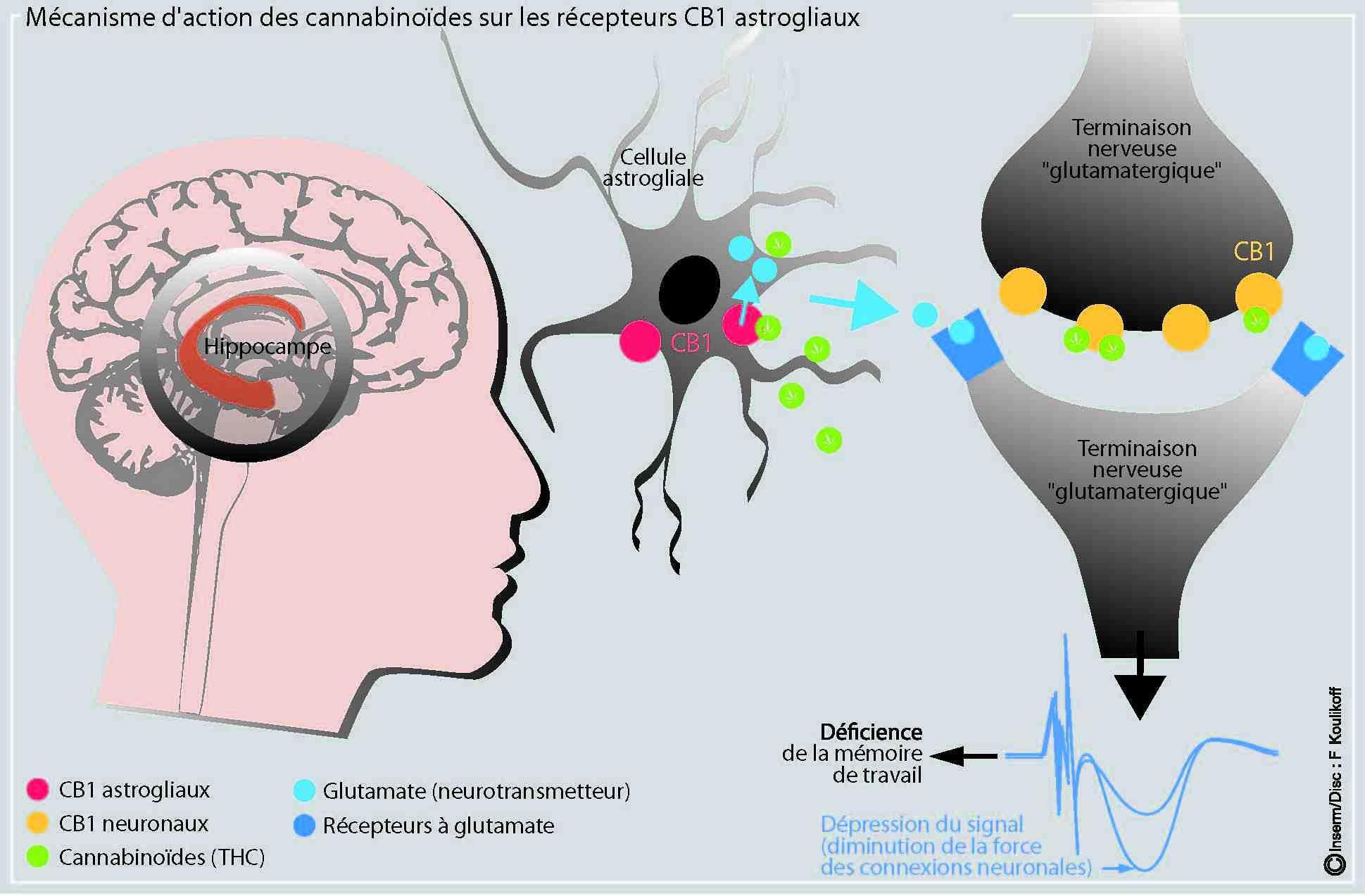 Quels sont les effets secondaires du CBD ?